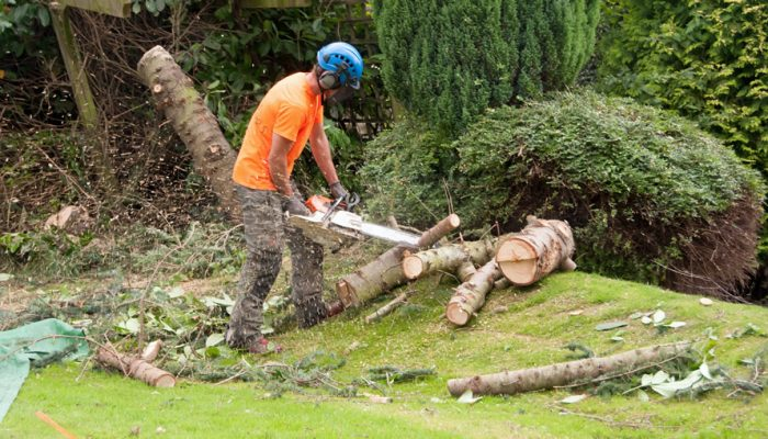 Rich Fagan & Son's Tree Surgery and Landscaping
