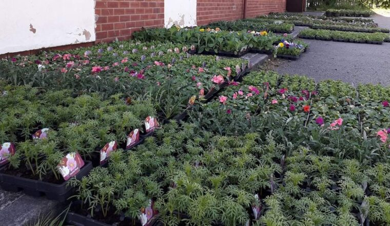 Scout Hut bedding plant sale!