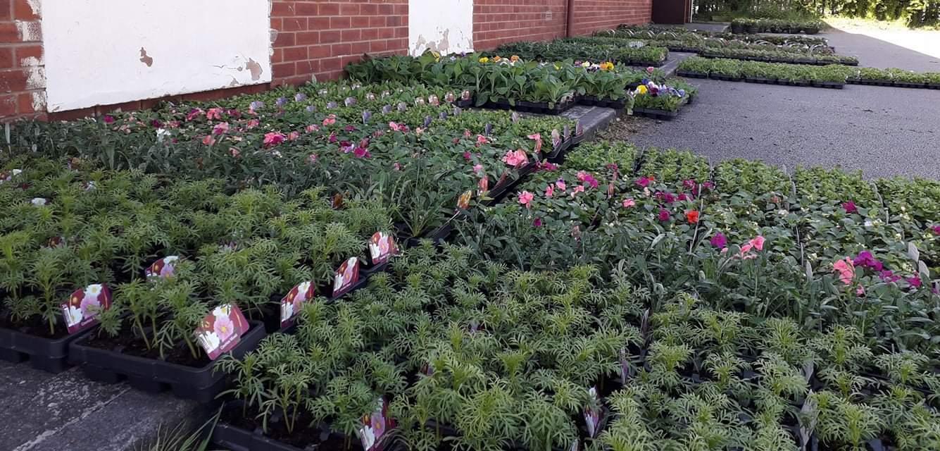 Scout Hut bedding plant sale!